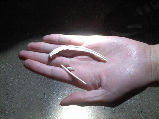 砂浜 大きな魚の骨